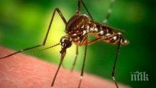 Властите в Рим тръгват на борба с комарите, заради рядък вирус