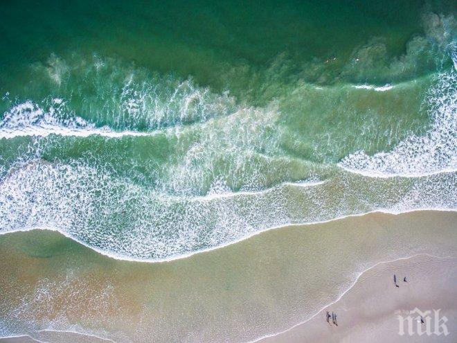МИСТЕРИЯ! Океанът изхвърли странно същество на плажа след урагана Харви (СНИМКИ)