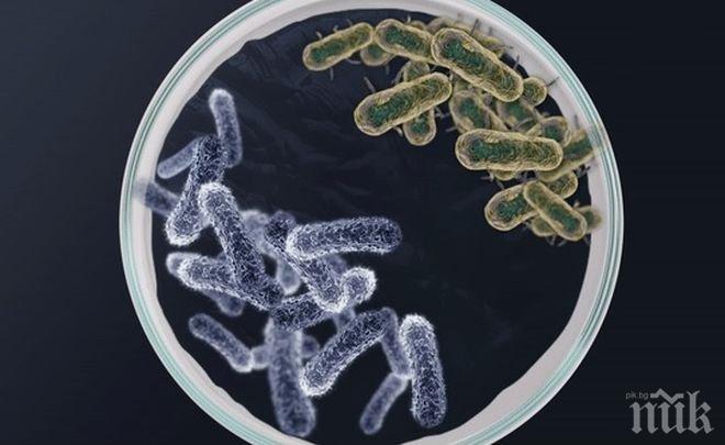 """В Австралия учени откриха нови """"неуязвими"""" форми на живот"""