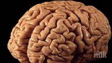 НЕВЕРОЯТНО! Ето кога е най-умен човешкият мозък