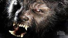 """Мистерия: Върколаци """"крадат"""" кучета и котки (ВИДЕО)"""