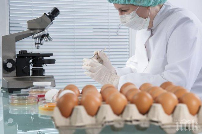 Прокурори влязоха в базата със заразени яйца в Поликраище