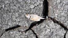 ЧУДО! Риба валя в Мексико (СНИМКИ)