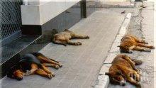 Увеличава се броят на изоставените кучета в София
