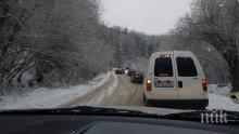 ЗИМНА БЛОКАДА! Снегът на Петрохан повали дървета, ограничено е движението
