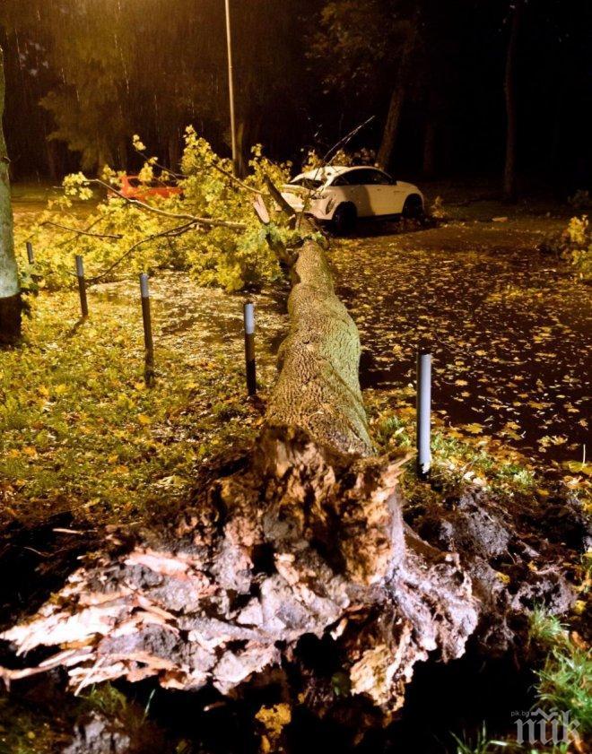 Ураганен вятър взе жертви в Полша