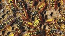 МИСТЕРИЯ! 70-годишна пчеларка се размина на косъм - нажилиха я 200 пчели