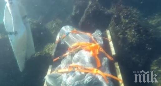 ПОДВОДНА АТРАКЦИЯ: Русалка ще радва гмуркачите край Приморско