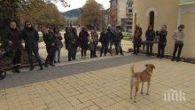 Бум на отровени кучета в Перник