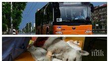 """ВАРВАРСТВО В """"ЛЮЛИН""""! Кварталът изтръпна от ужас! Шофьор на рейс 82 разчлени бездомно куче на спирка (СНИМКИ 18+)"""