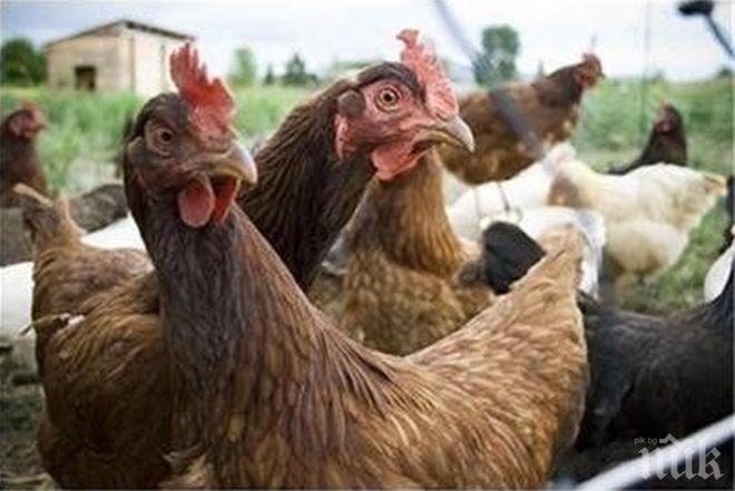 Русия спря вноса на пилешко месо от България