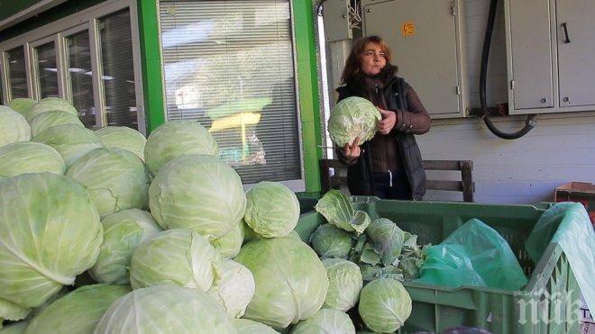 ГОРЕЩА ТЕМА: Ще убият ли ниските цени българското зеле?