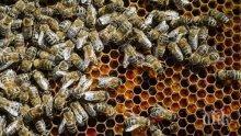 МОР! Пчели за милион долара загинаха в катастрофа