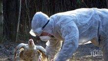 Агенцията по храните: 90 хил. птици са унищожени заради огнища на инфлуенца