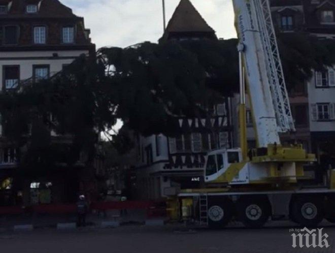 Гаф! Коледната елха в Страсбург рухна (ВИДЕО)