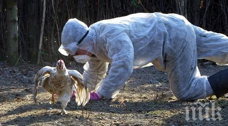 КРАЙНА МЯРКА! Изтребиха 70 000 птици край Стралджа заради птичи грип