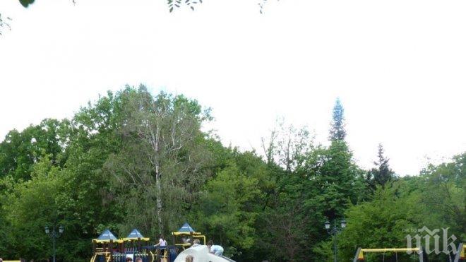 Алармират за незаконна сеч в Борисовата градина