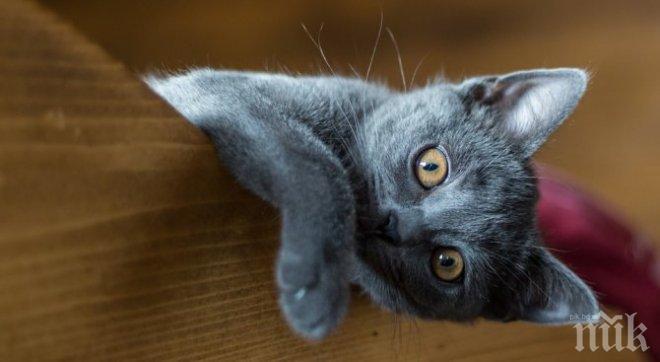 Котка побърка съседите със силна музика