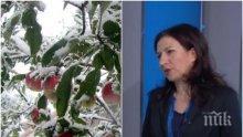 ЗИМАТА ИДВА! Синоптик от БАН с мразовита прогноза - сняг затрупва България още другата седмица