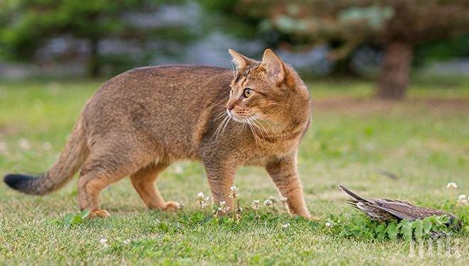 Шок! Заподозряха улична котка за убийство на пенсионерка в Япония