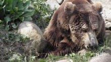 Застреляха мечка в Казанлъшко