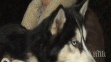 Пещерняци спасиха домашното куче Ласи, паднало в пропаст (СНИМКИ)