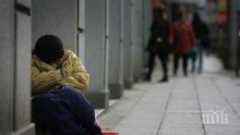 Затягат контрола в пловдивските приюти за бездомни