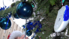 Елхата в Благоевград - 25 метра блясък за Коледа