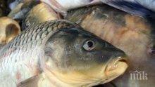 ПРЕДИ НИКУЛДЕН: Започват засилени проверки на търговците на риба