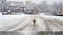 ИДВА СТУД! Валежите от дъжд ще преминат в сняг, температурата пада до -7