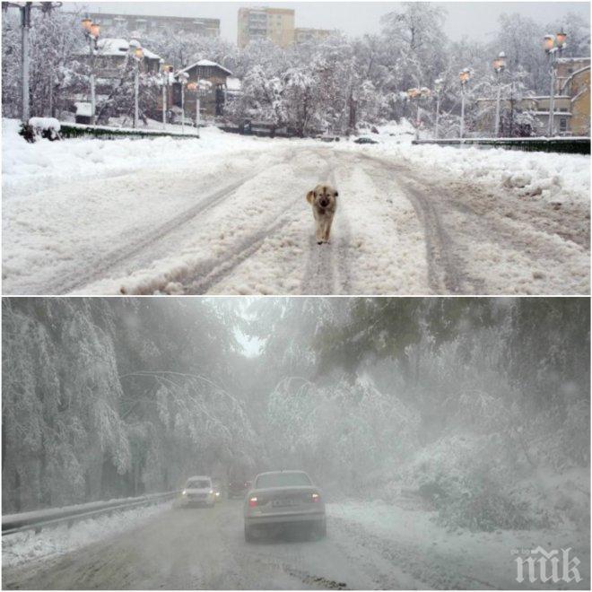 ПЪРВО В ПИК! Сняг на парцали затрупва София (ВИДЕО/СНИМКИ)
