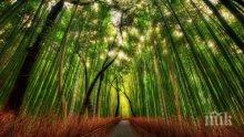 МИСТИКА! Ето кои са дърветата с тайнствени сили