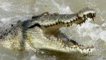 НОВО 20! Богаташите ядат пържоли от крокодил на Коледа