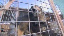 """СКАНДАЛНО РАЗКРИТИЕ! Кучета изчезват от приютите на """"Екоравновесие"""""""
