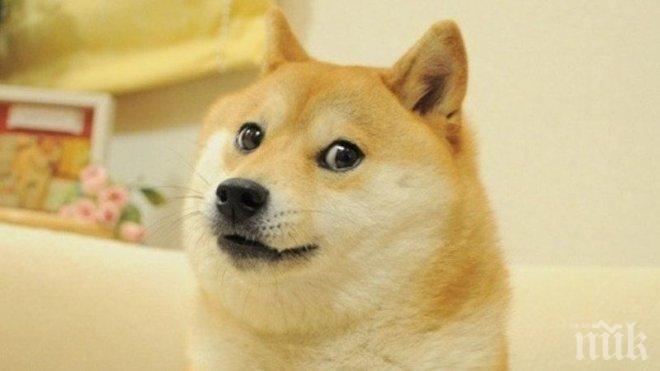 Идва годината на Жълтото земно куче! Какво ни чака?