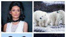 ВОЙНА НА СИЛИКОНА! Калина Паскалева закова Николета: Белите мечки не си говорят с пингвините!