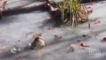 УНИКАЛНО! Ето как алигатори се спасяват от студа (ВИДЕО)
