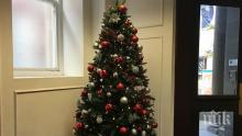 Най-подходящият момент за свалянето на новогодишната елха според психолози е...