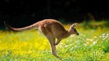 ХИТ! Снимка на секси кенгуру направи фурор в нета
