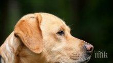 ШОКИРАЩО! Отровиха кучето-водач на незрящ в София