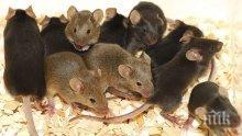 Уникално! Мишки изядоха парите в банкомат в Астана (ВИДЕО)