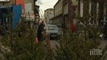 Столична община с кампания за събиране на коледни дръвчета за рециклирането им