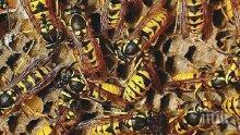 ЛУДОСТ! Индиец скри рояк пчели под потника си (СНИМКА/ВИДЕО)