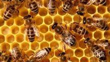 Американски вандал избил милиони руски пчели