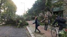 УЖАС! Броят на загиналите заради силните ветрове в Европа се увеличи до девет души