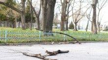 Вятърът разпиля дървета и клони на Гребната в Пловдив