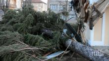 Ураганен вятър бушува в Сливен