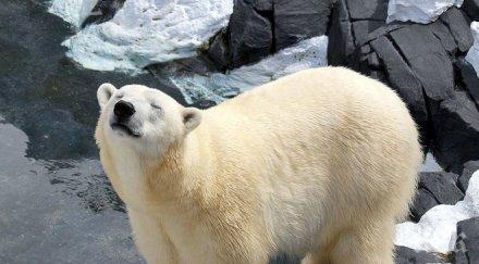 Притеснително! Учени алармират: Скоро бозайниците ще изчезнат от лицето на Земята
