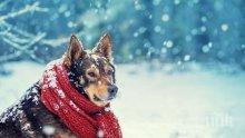 КУЧЕШКИ СТУД! Сряда идва с мразовито утро, термометърът пада до минус 9 градуса