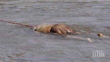 ИЗВЪНРЕДНО! Труп на жена изплува край Бургас